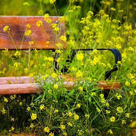 Flower bench in spanish field by Marjorie Speiser - Artistic Objects Furniture ( field, overgrown, bench, yellow, flower )