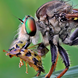 Snack #2 by Dedy Taufan - Animals Insects & Spiders ( dedy taufan )