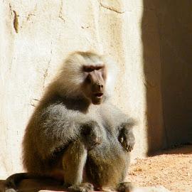 OOOOOoooooo.  by Donna Probasco - Novices Only Wildlife (  )
