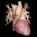 Cardiological APK for Kindle Fire