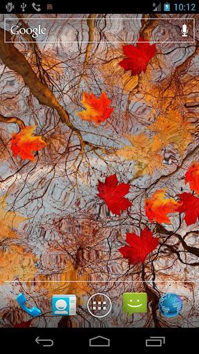 秋のメープルライブ壁紙