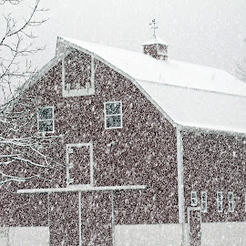 by Christine Warner - News & Events Weather & Storms ( novice, nature, snow, snowing, winter, cold )