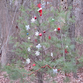 Simple Little Christmas Tree in the Woods by Marcia Taylor - Novices Only Landscapes (  )