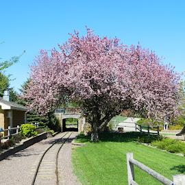 The Story Begins by Taylor Bice - City,  Street & Park  Amusement Parks ( train tracks, blue sky, park, storybook land, tree, nice day, green, no edit, south dakota, aberdeen, spring, tunnel )