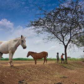 The horse show by Amol Patil - Animals Horses ( leading lines, sky, horse, dof )