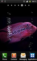 Screenshot of Aquarium Flowerhorn LWP