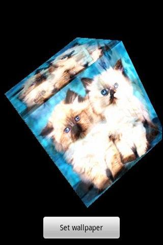 三維可愛的小貓 1