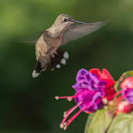 Backing Up by Sue Matsunaga - Animals Birds