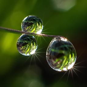by Kawan Santoso - Nature Up Close Natural Waterdrops