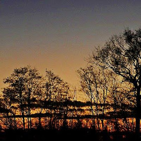 Silhouettes in Sunset by Nat Bolfan-Stosic - Landscapes Sunsets & Sunrises ( clouds, winter, sunset, silhouettes, trees )