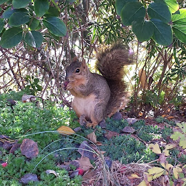 Care free by Desiree Ramirez - Animals Other ( animals, eating, garden, squirrel, animal )