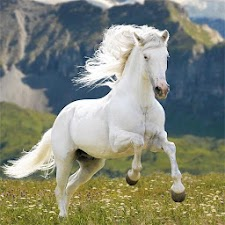 Stunning Horse Images