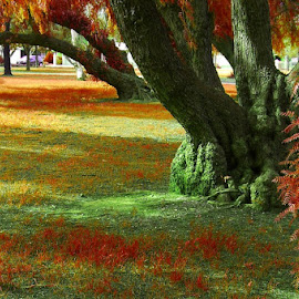 Real Autumn by Leigh Martin - City,  Street & Park  City Parks ( leaves red park lands trees,  )