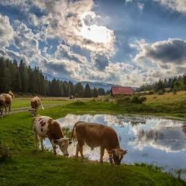 At the pond by Stanislav Horacek - Landscapes Prairies, Meadows & Fields