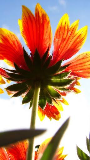 綺麗な花のジグソーパズル