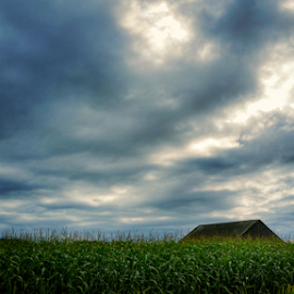 amongst it all by Todd Reynolds - Landscapes Cloud Formations ( field, clouds, barn, fall, corn )