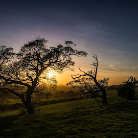 Farthing common at last light by Andy Smith - Landscapes Caves & Formations ( sunset, kent, trees, light, farthing-common )