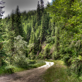 Stravorema by Stratos Lales - Landscapes Forests ( driving, path, trees, forest, road )