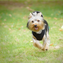 lee by Michal Zbojan - Animals - Dogs Running