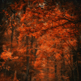 Autumn 4 by Kelly Murdoch - Nature Up Close Trees & Bushes ( orange, uk, wood, crisp, leaf, leaves, woods, ztam, england, red, season, autumn, bark, path, trees, walk, branches, fall, color, colorful, nature )