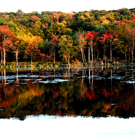 Autumn by Lori Appnel Boggetti - Landscapes Forests ( reflection, fall leaves, fall colors, autumn, fall, lake, leaves, pond, color, colorful, nature )