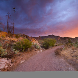 Desert Dusk by Sue Cullumber - Landscapes Sunsets & Sunrises ( desert, nature, sunset, twilight, trail, arizona, path, landscape, dusk, sonoran )