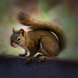 by Leslie Collins - Animals Other ( natural light, park )