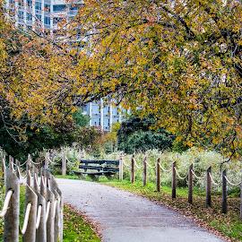 City Park by Laimis Urbonas - City,  Street & Park  City Parks ( fence, bench, park, fall, path, chicago )