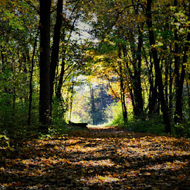 by Chandra Whitfield - Landscapes Forests ( nature, autumn, fall, trail, forest, leaves, woods, photography )