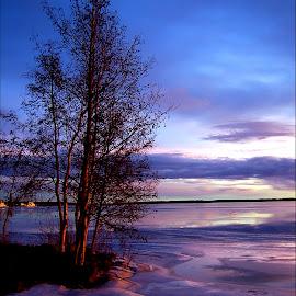 Purple by Kajsa Karlsson - Landscapes Beaches ( winter, tree, purple, sunset, ice, snow, trees, ocean, lavender,  )