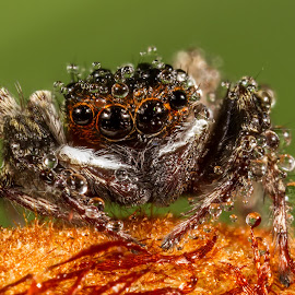 by Francois Loubser - Animals Insects & Spiders