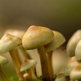 Mashroom Macro by Nico Carbajales - Nature Up Close Mushrooms & Fungi