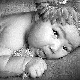 Ava B&W by Monica Smith - Babies & Children Child Portraits ( headband, black and white, baby, cute, flower,  )