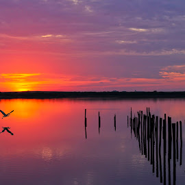 Be Still by Jim Livingston - Landscapes Sunsets & Sunrises ( bird, water, sunset, lake, sunrise )