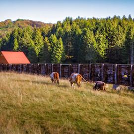 Early Fall by Stanislav Horacek - Landscapes Prairies, Meadows & Fields