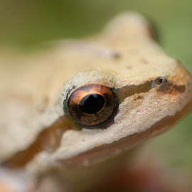 by Larry Rogers - Animals Amphibians