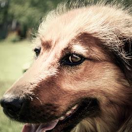 by Nikolai Zemljannikov - Animals - Dogs Portraits