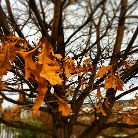 Last leaves by Vadim Malinovskiy - Instagram & Mobile iPhone