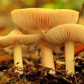 by Eva Doe (Antonija Kodžoman) - Nature Up Close Mushrooms & Fungi