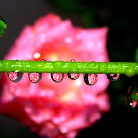 by Sujatha Bharathi - Nature Up Close Natural Waterdrops
