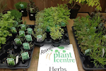 Buy fresh herbs Colchester and Sudbury suffolk