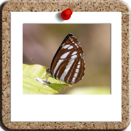 蝶々写真 攝影 App LOGO-APP試玩