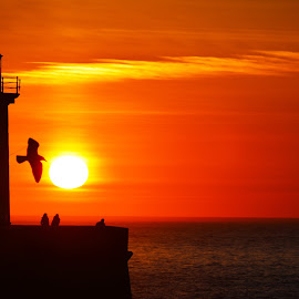 by José Pedro Whiteman - Landscapes Sunsets & Sunrises ( bird, contrast, cloouds )