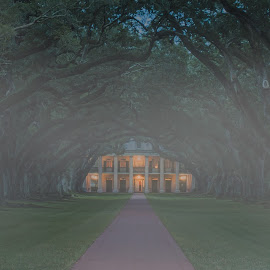 Early Morning at Oak Alley by Sheldon Anderson - Buildings & Architecture Homes ( fog, old south, louisiand, morning, oak alley, plantation )