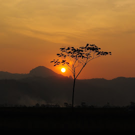 Waiting for Sunset by Piping Alhaqi - Landscapes Sunsets & Sunrises ( nature, tree, sunset )