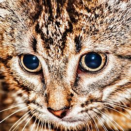 Meet Dog by Dee Tee - Animals - Cats Kittens ( kitten, cat, texture, fur, close up, eyes,  )
