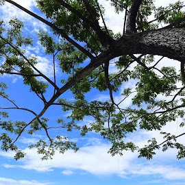 tree and blue sky by Joko Prasetyo - Nature Up Close Trees & Bushes
