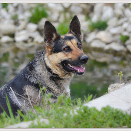 smile by Jojo Pried-Horsky - Animals - Dogs Portraits ( look, pjatka, dog, smile, friend, animal )