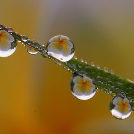 :: Come Together :: by Dedy Haryanto - Nature Up Close Natural Waterdrops
