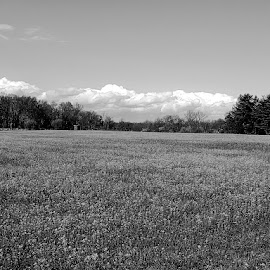 Spring growth by Sue Delia - Landscapes Prairies, Meadows & Fields ( field, yellow fields, spring, black and white, b&w, landscape )